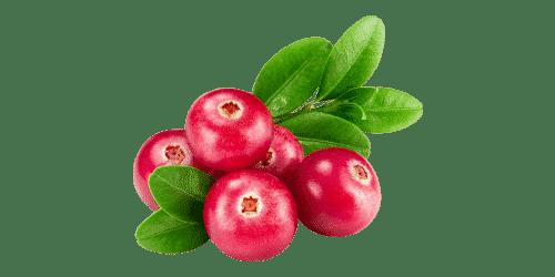 Nutreov_Cranberry_visuel